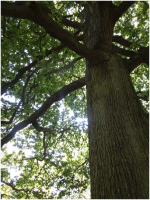 BS5837 Tree Survey for planned development